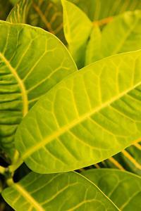 Green Leaves I by Karyn Millet