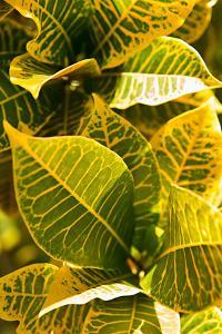 Green Leaves II by Karyn Millet