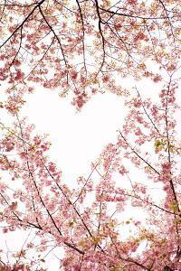 Heart in the Trees I by Karyn Millet