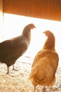 Hens by Karyn Millet