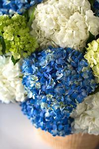 Hydrangea Bouquet by Karyn Millet