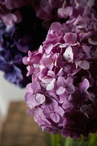 Hydrangea by Karyn Millet