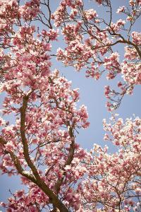 In Bloom V by Karyn Millet