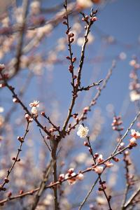 In Bloom X by Karyn Millet