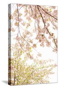In Bloom XIX by Karyn Millet