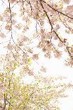 Lemons I-Karyn Millet-Photographic Print