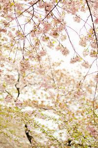 In Bloom XVIII by Karyn Millet