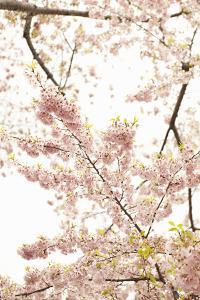 In Bloom XXI by Karyn Millet