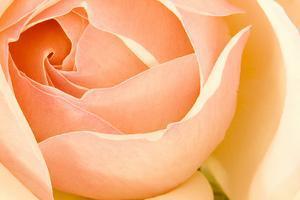 In Full Bloom I by Karyn Millet