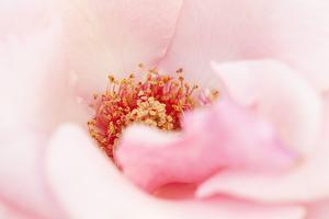 In Full Bloom III by Karyn Millet