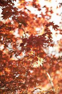 In the Trees I by Karyn Millet