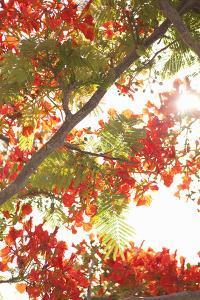 In the Trees II by Karyn Millet
