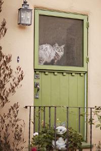 Kitty in the Window by Karyn Millet