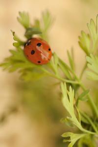 Lady Bug II by Karyn Millet