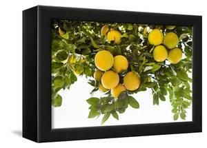 Lemon Grove I by Karyn Millet