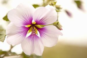 Macro Bloom I by Karyn Millet