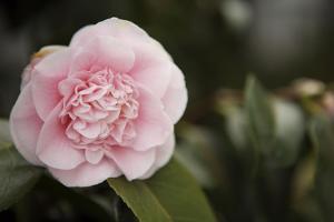 Macro Bloom V by Karyn Millet