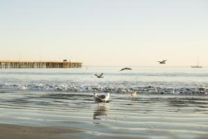 Ocean Pier by Karyn Millet