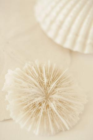 Ocean Treasures I by Karyn Millet