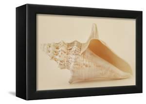 Ocean Treasures IX by Karyn Millet