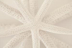 Ocean Treasures VII by Karyn Millet