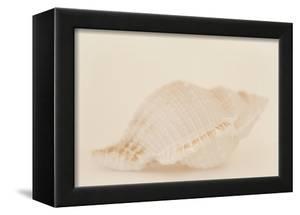 Ocean Treasures VIII by Karyn Millet