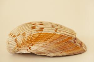 Ocean Treasures X by Karyn Millet