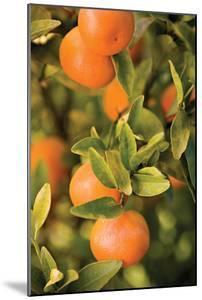 Oranges II by Karyn Millet