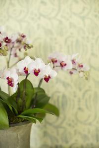 Orchid Vase by Karyn Millet