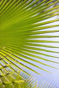 Palm Branch by Karyn Millet