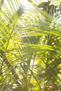 Palm Fonds II by Karyn Millet
