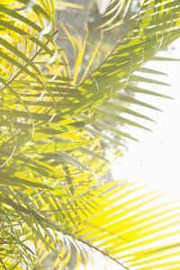 Palm Fonds by Karyn Millet