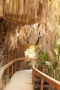 Palm Pathway I by Karyn Millet