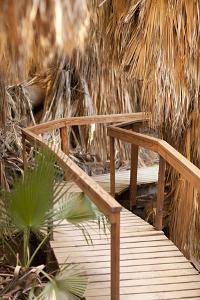 Palm Pathway II by Karyn Millet
