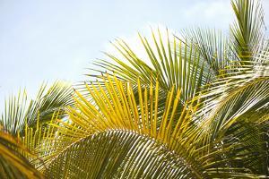 Palms at Noon by Karyn Millet
