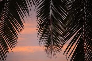 Palms at Sunset by Karyn Millet