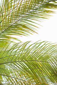Palms in the Sun I by Karyn Millet