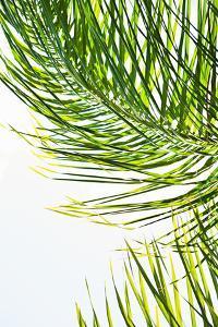 Palms in the Sun II by Karyn Millet
