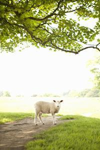 Pasture Sheep III by Karyn Millet