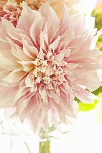 Pink Dahlia I by Karyn Millet