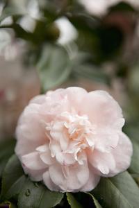 Pink Flowers III by Karyn Millet