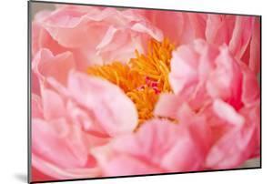 Pink Peony V by Karyn Millet