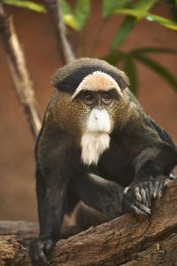 Primate I by Karyn Millet