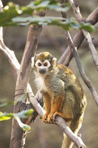 Primate II by Karyn Millet