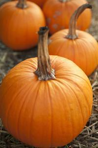 Pumpkins I by Karyn Millet
