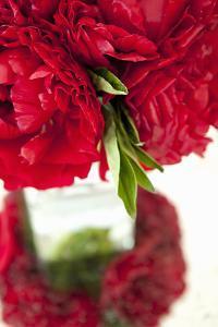 Ranunculus I by Karyn Millet