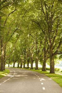 Road Through the Grove by Karyn Millet