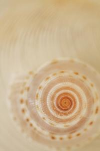 Sea Shells I by Karyn Millet