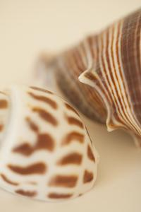 Sea Shells II by Karyn Millet