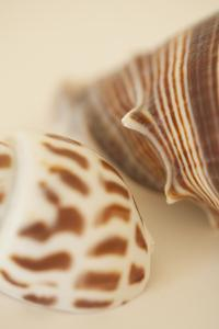 Sea Shells II by Karyn Millet